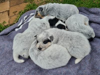 20210204 085112 pups